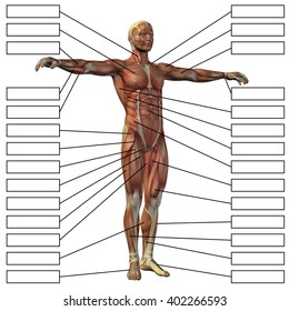 concept 3d male human anatomy 260nw 402266593 concept 3 d male human anatomy man stock illustration 409354291