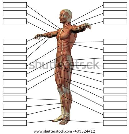 Concept 3 D Male Human Anatomy Man Stock Illustration Royalty Free