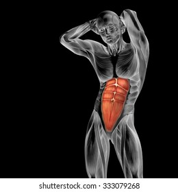 Concept or conceptual 3D chest human anatomy or anatomical and muscle isolated on black background metaphor to body, tendon, spine, fit, abs, strong, biological, gym, fitness, skinless, health medical