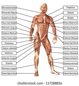 concept conceptual 3d human anatomy 260nw 117288856 high resolution concept conceptual 3 d human stock illustration