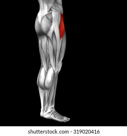 Concept or conceptual 3D human upper leg anatomy or anatomical and muscle isolated on black background metaphor to body, tendon, fit, foot, strong, biological, gym, fitness, skinless, health medical