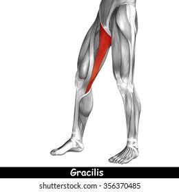 Leg Anatomy Images, Stock Photos & Vectors | Shutterstock