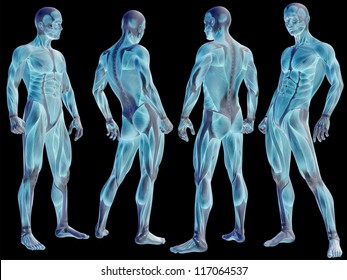 Concept or conceptual human or man 3D anatomy body with muscle isolated on black background as metaphor to medicine, sport, male, muscular, medical, health, biology or fitness group or set