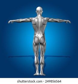 Concept or conceptual human or man 3D anatomy body with muscle over blue background, metaphor to medicine, sport, male, muscular, medical, health, medicine, biology, anatomical, strong fitness design