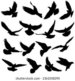 Concept of love or peace. Set silhouettes doves.