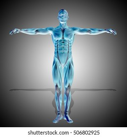 Concept strong human man 3D illustration anatomy body with muscle for health or sport over gray background for medicine, sport, muscular, medical, health, medicine, biology, anatomical, fitness design