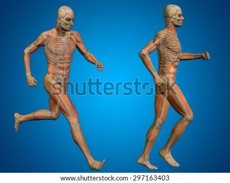 Conceptual 3 D Human Man Male Skeleton Stock Illustration 297163403