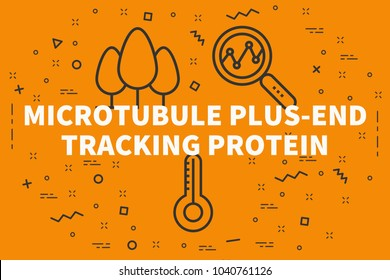 Conceptual business illustration with the words microtubule plus-end tracking protein