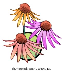 Cone Flowers. A color illustration of the pollinator-friendly plant named Cone Flowers.