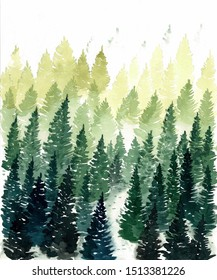 Coniferous forest watercolor painting. Coniferous trees Illustration.