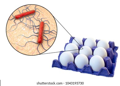 Contamination of eggs with Listeria monocytogenes bacteria, medical conceptual image for transmission of listeriosis, 3D illustration
