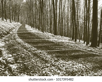 Copy of old lithographic technique. First snow fall in forest. Path leading among the beech trees in autumn forest.