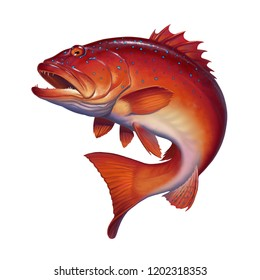 Coral trout on white. Leopard coral groupe, or leopard coral trou. Realistic illustration.