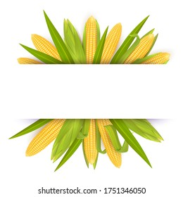 Corn frame template, realistic illustration. Label for packaging with yellow ripe corn cobs and copy space. Sweet maize card.