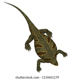 Cotylorhynchus Dinosaur on White 3D illustration - Cotylorhynchus was a synapsid herbivorous reptile that lived in North America during the Permian Period.