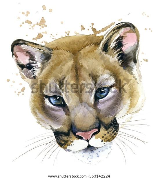 fa094fd17afaf Cougar Watercolor Illustration Mountain Lion Stock Illustration ...