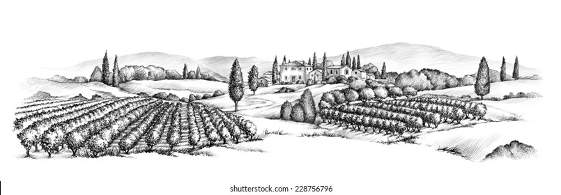 Country view vine illustration