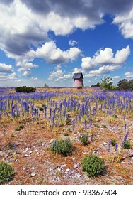 Countryside landscape with purple flowers and an old wind mill.