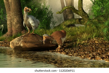 A couple of dodo birds, one brown, the other white drink on the shores of a river running through the tropical jungles of the island of Mauritia. 3D Rendering
