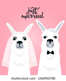 Couple llamas newlyweds. Bride in veil. The groom in a bow tie. Hand lettering just married