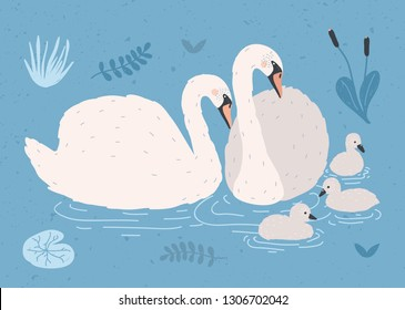 Couple of white swans and brood of cygnets floating together in pond or lake among plants. Adorable family of wild birds, waterfowl. Flat colorful hand drawn illustration in cartoon style.
