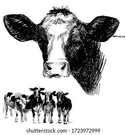 Cow. Farm animals. cattle illustration