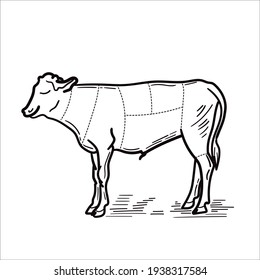 Cow. Hand drawn in a graphic style. Vintage engraving illustration for poster, web. Isolated on white background