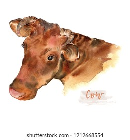 Cow of hand-painted watercolor illustration. Portrait of farm animals facet. Logo watercolor. Drawn sketch isolated on white background.