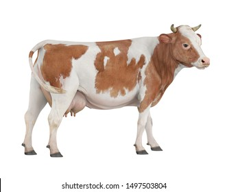 Cow isolated on white background. 3D rendering