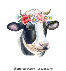 Cow portrait with flower wreath, crown isolated on white background. Watercolor. Template. Close-up. Illustration. Hand drawing. Painting. Realistic cow