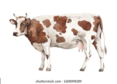 Cow watercolor illustration paint. White isolated background