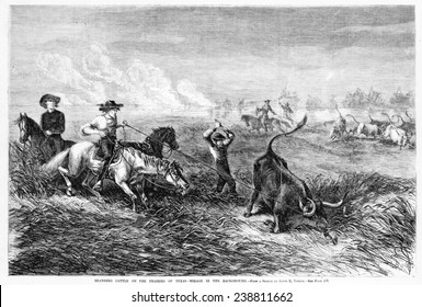 Cowboys branding cattle on the prairies of Texas. Woodcut from a sketch by James E. Taylor. Frank Leslie's illustrated newspaper, 1867