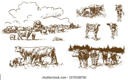 cows and calves on pasture - hand-drawn illustrations