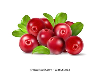 Cranberry with leaves on white background. Quality realistic , 3d illustration
