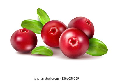 Cranberry with leaves on white. Full depth of field. Quality realistic , 3d illustration