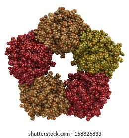 C-reactive protein (CRP, human) inflammation biomarker, chemical structure. Infections and inflammation cause increased blood levels of this protein. Atoms represented as spheres. Per chain coloring.