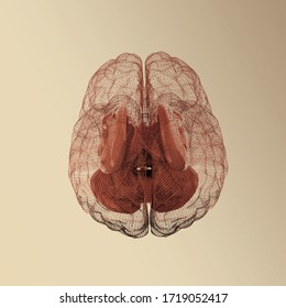 Creative concept of the human brain. 3d render on toned background