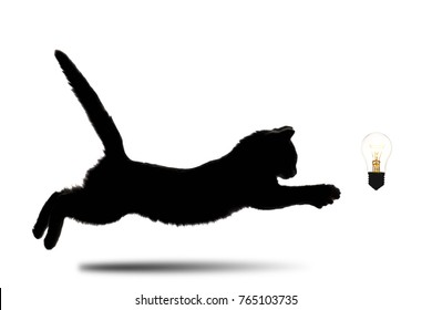 creative idea, black and white silhouette of little kitten running forward to glowing lamp on white isolated background, concept achievements and innovations