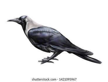 Creative representation of black crow watercolor painting on white background