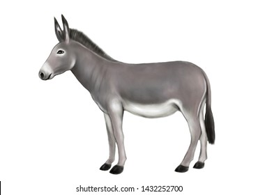 Creative representation of Standing isolated donkey watercolor painting in white background