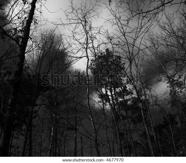 Creepy dark haunted forest