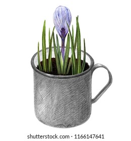 Crocus flowers and leaves in vintage mug. First spring growth in a pot. Home decor element