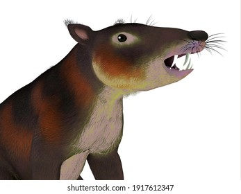 Cronopio Mammal Head 3d illustration - Cronopio is an extinct carnivorous mammal that lived in South America during the Cretaceous Period.