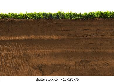 Cross section of grass on soil