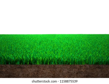 Cross section of grass and soil, against white background, 3D illustration.