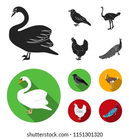 Crow, ostrich, chicken, peacock. Birds set collection icons in black, flat style bitmap symbol stock illustration web.