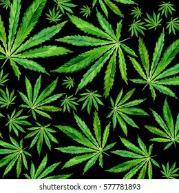 Crowd of Cannabis leaves on black background. Hand drawn watercolor illustration of the plant Cannabis Sativa or Marijuana. Pattern with marijuana leaf for label, poster, web.