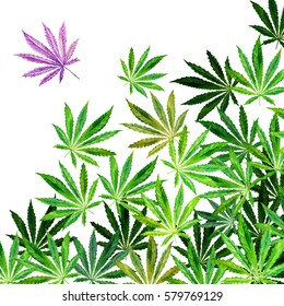 Crowd of Cannabis leaves on white background. Hand drawn watercolor illustration of the plant Cannabis Sativa or Marijuana. Pattern with marijuana leaf for label, poster, web.