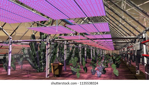 Cultivation of Fruiting Cacti on Mars for Vitamin C - 3D Illustration