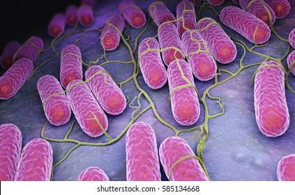 Culture of Salmonella bacteria. 3D illustration